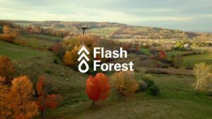 Flash Forest feature image